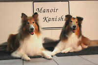 Dog BOARDING, Dog GROOMING, CAT Boarding... MANOIR KANISHA