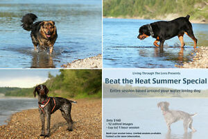 Dog photography summer special