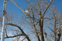 The Tree Undertaker Ltd. Complete tree care and removals