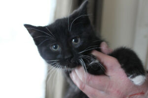 Free Kittens to Good Homes