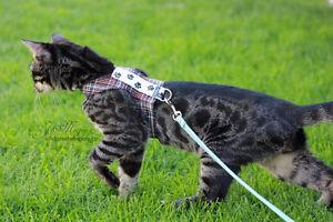 Custom Cat Harnesses!! Edmonton Edmonton Area image 1