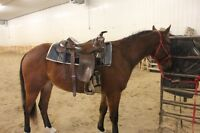 Beautiful roping saddle for sale! 1100$ OBO!