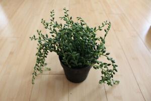 Small Artificial Fake Ikea Plant Fejka - Petite Plante Artificie