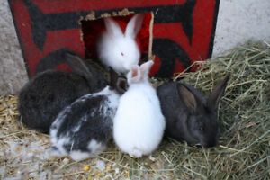 Bunnies for Sale - Reserve Today!