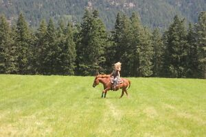 Equine training and sales services