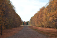 Secluded Walk Out on Acreage for Sale