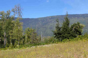 2524 Mabel Lake Road, Enderby - 305 acres of prime land!