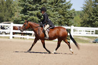 English riding lessons both recreation and show team programs