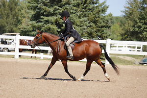English riding lessons both recreation and show team programs Kingston Kingston Area image 1