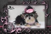 Bather / Grooming Assistant needed at K-9 Klippery