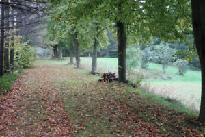 10.4 treed acres - Ancaster