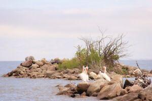 LAKE LOTS FOR SALE ON BEAUTIFUL LAKE DAUPHIN