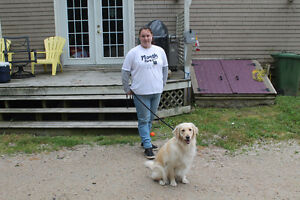 PET WALKER AVAILABLE IN MAHONE BAY AREA ...