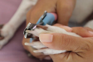 Nail trims! Dogs, cats, bunnies.. Pretty much anything!