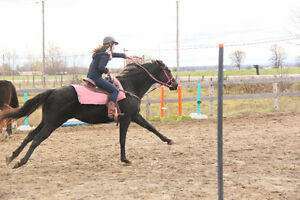 Horseback Riding Camp for Experienced riders-Aug 14 – 18