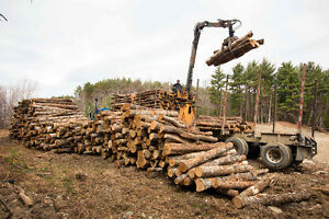 Sustainable Roadside and Processed Firewood for purchase