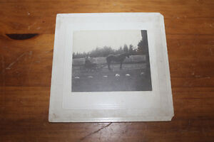 Interesting Vintage Photograph - Woman In Barrel Cart w. Dog