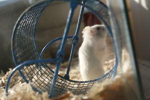 Luxurious Hamster Resort - Bonded & Insured, PSI Member