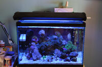 Saltwater aquariums with everything you need!