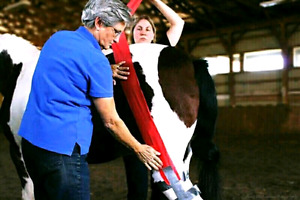 Equine First Aid Course in Otterville