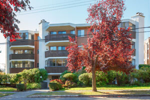 Reduced! Beautifully Updated 2 BR Condo on Quiet Ave, Fairfield