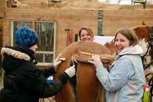 Equine First Aid Course In Clifford Ont Sat Oct 1 Stratford Kitchener Area image 5