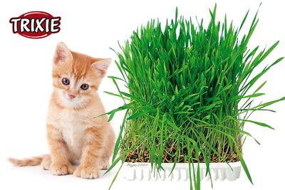 Katzengras Saatgut & Schale - Katzengras Samen Katzengras-Schale cat grass cats