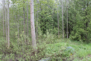 Private Treed Lot in Geogian Bluffs with Water Access