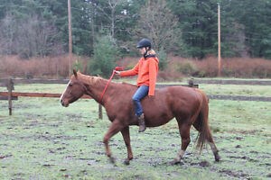 2003 sorrel QH kids/trail horse Campbell River Comox Valley Area image 4