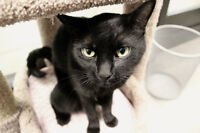 GEARS Up for Adoption - Arnie!
