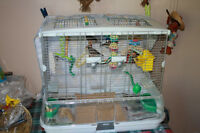 three zebra finches with Hagen vision cage model M01