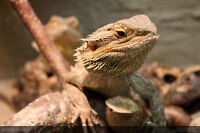 Love to take free unwanted lizards,habitats,tanks &accessories
