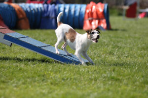 Dynamo Dogsports Agility Classes starting in January!