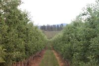 Apple Pickers wanted starting  September 13