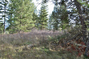 Great Building Lot on South Lakeside Williams Lake Cariboo Area image 7
