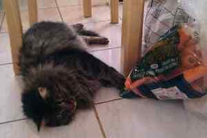 Chat perdu beaumont