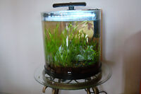 Half-Moon Desktop Aquarium Fish tank w/ live plants and Fish