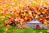 Ramassage De Feuilles/ Leaf // leaves raking removal