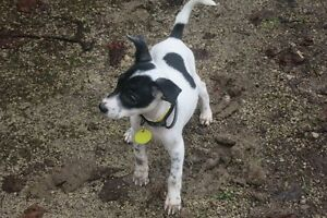 Jigsaw - adorable rescue puppy available for adoption