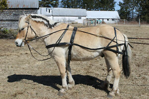 Leather light horse harness