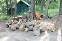 Cut and blocked Hemlock firewood