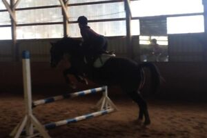 Have some horses that are in need of exercise/conditioning?