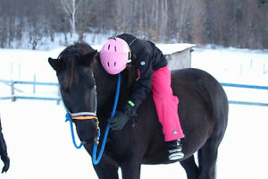 Canadian Quarter Horse for Lease