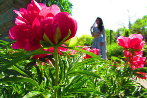 Special Photography, 1 Hour only $ 49 Kitchener / Waterloo Kitchener Area image 3