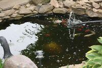 Koi, Goldfish, shubunkins, for a nice pond