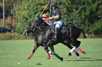 POLO: Don't just wear it, PLAY IT!