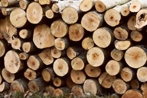 Truck loads of seasoned hardwood logs for firewood