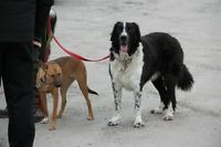 Professional Dog Training in Niagara - private in-home training
