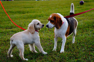 Professional Dog Walking Services in Ottawa **NEW CLIENT PROMO**