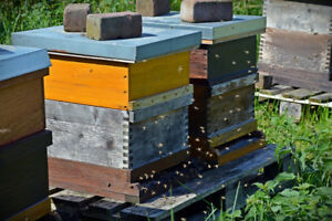 WANTED BEE HIVES/BOXES/ BEES/PARTS AND PIECES/??? NEW OR USED